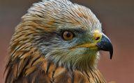 10 Amazing Birds Of Prey Cool HD Wallpapers