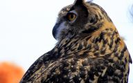 Amazing Birds Of Prey 11 Cool Wallpaper