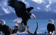 Amazing Birds Of Prey 12 Wide Wallpaper