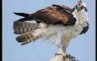Amazing Birds Of Prey 19 Widescreen Wallpaper