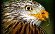 Amazing Birds Of Prey 28 Cool Hd Wallpaper
