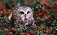 Amazing Birds Of Prey 29 Cool Hd Wallpaper