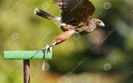 Amazing Birds Of Prey 37 Wide Wallpaper