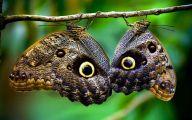 Are Butterflies Animals 1 Free Hd Wallpaper