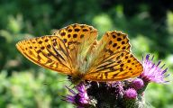 Are Butterflies Animals 12 Background Wallpaper