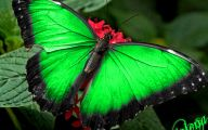 Are Butterflies Animals 14 Free Wallpaper