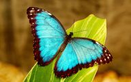 Are Butterflies Animals 18 Hd Wallpaper