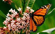 Are Butterflies Animals 20 Cool Wallpaper