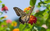 Are Butterflies Animals 22 Cool Wallpaper