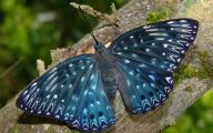 Are Butterflies Animals 23 Free Wallpaper