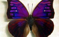 Are Butterflies Animals 25 Background Wallpaper
