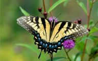 Are Butterflies Animals 27 Background Wallpaper