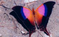 Are Butterflies Animals 28 Widescreen Wallpaper