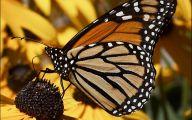 Are Butterflies Animals 31 Wide Wallpaper