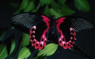 Are Butterflies Animals 32 Desktop Wallpaper