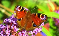 Are Butterflies Animals 34 Free Hd Wallpaper
