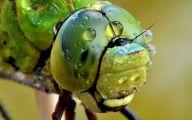 Are Butterflies Animals 35 Hd Wallpaper