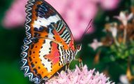 Are Butterflies Animals 36 Free Wallpaper