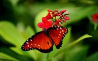 Are Butterflies Animals 37 Background