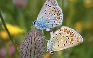 Are Butterflies Animals 39 Free Hd Wallpaper