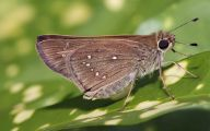 Are Butterflies Animals 5 High Resolution Wallpaper