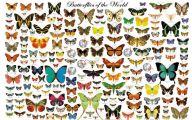 Are Butterflies Animals 6 Widescreen Wallpaper