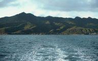 Little Barrier Island Giant Weta 11 Desktop Background