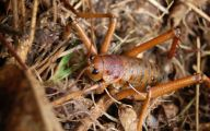 Little Barrier Island Giant Weta 18 Cool Hd Wallpaper