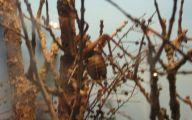 Little Barrier Island Giant Weta 2 Free Wallpaper