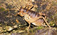 Little Barrier Island Giant Weta 4 Cool Hd Wallpaper