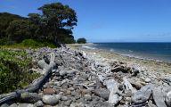 Little Barrier Island Giant Weta 5 Wide Wallpaper