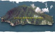 Little Barrier Island Giant Weta 7 Background