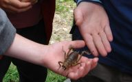 Little Barrier Island Giant Weta 9 Hd Wallpaper
