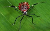 Rainforest Animals And Insects 13 Hd Wallpaper