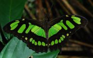 Rainforest Animals And Insects 15 Wide Wallpaper
