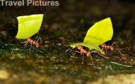 Rainforest Animals And Insects 2 Widescreen Wallpaper