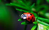 Rainforest Animals And Insects 24 Free Wallpaper
