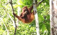 Rainforest Animals And Insects 30 Cool Hd Wallpaper