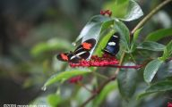 Rainforest Animals And Insects 5 Cool Hd Wallpaper