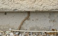 Termites In Arizona 1 Cool Hd Wallpaper