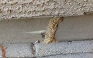 Termites In Arizona 10 Cool Hd Wallpaper
