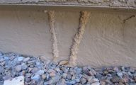 Termites In Arizona 13 Widescreen Wallpaper