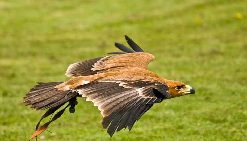 Amazing Birds Of Prey 34 Desktop Background Listtoday