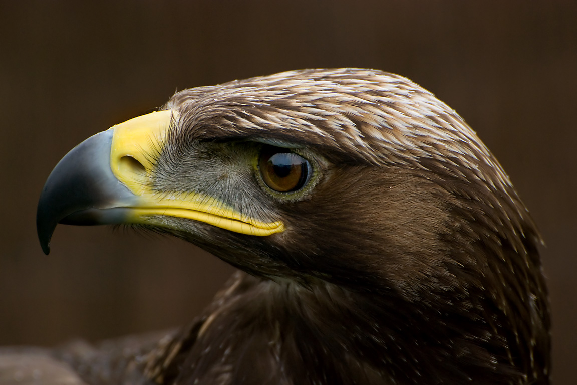 Amazing Birds Of Prey 7 Cool Wallpaper