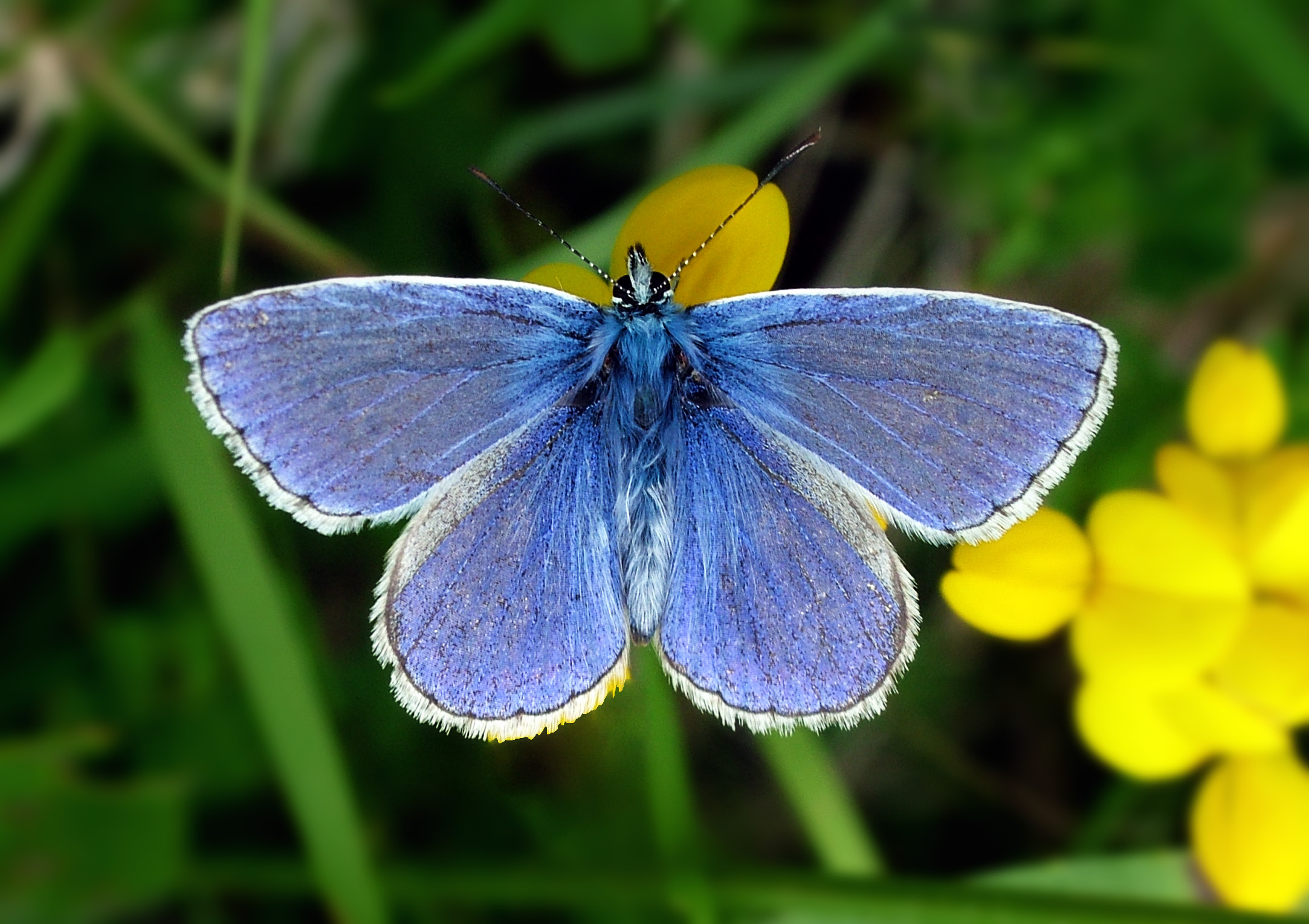 Are Butterflies Animals 13 High Resolution Wallpaper