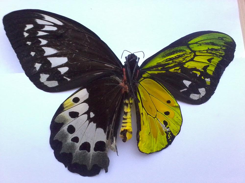 Are Butterflies Animals 15 Desktop Wallpaper
