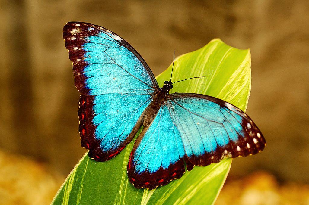 Are Butterflies Animals 18 Hd Wallpaper