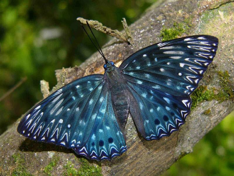 Are Butterflies Animals 23 Free Wallpaper
