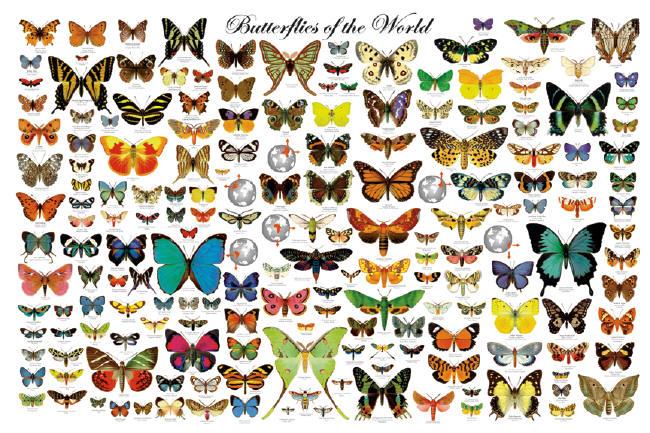 Are Butterflies Animals 6 Widescreen Wallpaper