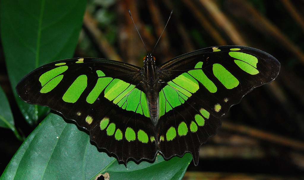 Rainforest Animals And Insects High Resolution Wallpaper